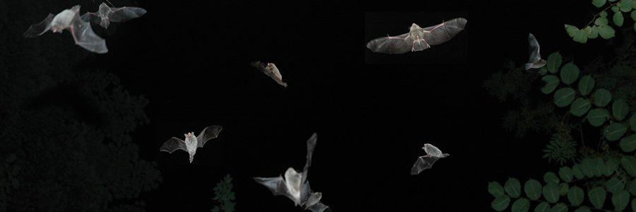 Nachtwanderung mit Bat-Detektoren