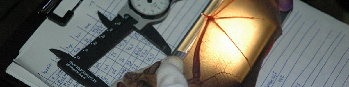 Fledermausforschung